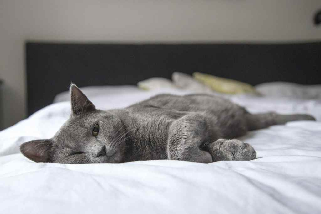Grey cat setting the example: doing nothing all day.