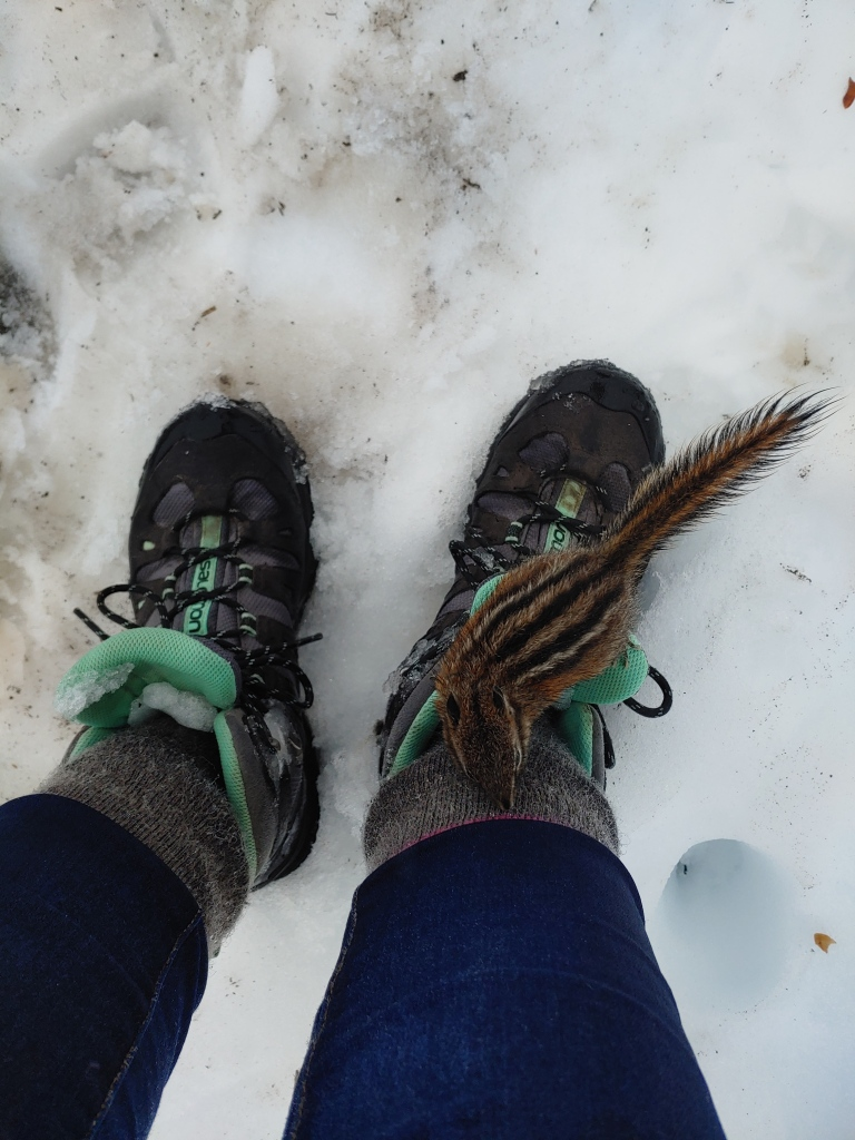 Mt Rainier snow-filled boots and a chipmunk.